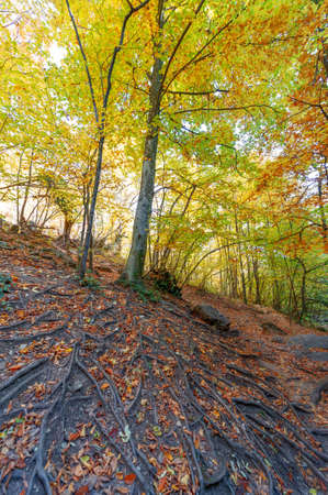 Photos of the Crimean peninsula in the fall, beech hornbeam forest. It grows at an altitude of 650-700 m, forests of rocky oak are replaced by beech and hornbeam. soil and water conservation Banco de Imagens