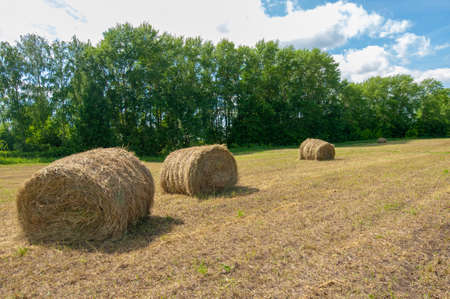 Summer landscape, haymaking, hayfields are huge round bales of hay. This is a compact way to store large amounts of hay with much less human stress.