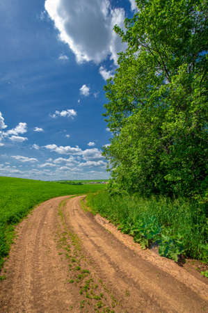 Summer landscape, green clover, livestock feed, dirt road, yellowed clay that makes up the road