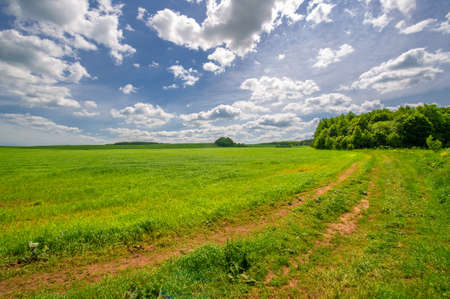 Summer landscape, green wheat, dirt road, yellow clay road surface