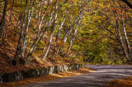 Autumn photos of the Crimean peninsula, Old highway, The charm of the mood of the old road. Banco de Imagens