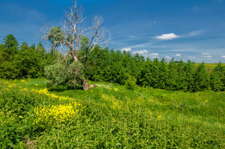 Summer landscape, ravines, meadows, green grasses of the summer landscape, the European part of the earth, sultry summer Imagens