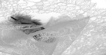 lace fabric. bird feather. white on a white background. Delicately crafted from yarn or thread, lace fabrics have historically embodied class and beauty since their inception in the 16th century.