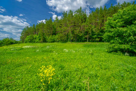 Summer landscape, countryside, bright green grass and trees, blue sky with white clouds, great summer mood