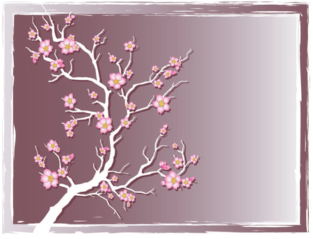cherry tree: cherry tree with blossoms