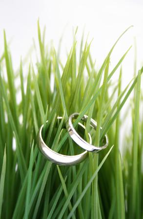 white gold wedding rings sitting in the grass Reklamní fotografie