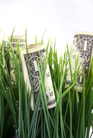 one dollar bills growing in the grass photo