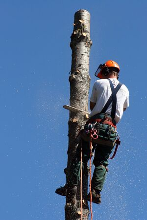 lumberjack on tree with chainsaw photo