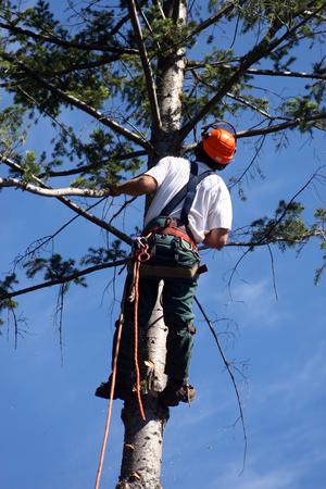 lumberjack climbing tree photo