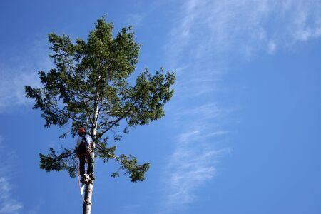suspender: lumberjack climbing tall tree