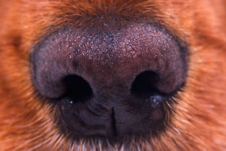 nose close up: Close up view of dog nose. Stock Photo