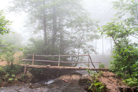 Foggy forest and bridge over stream on a mountain. photo