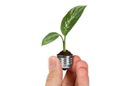 Energy saving concept, hand holding plant growing in electric light bulb, isolated on white background.