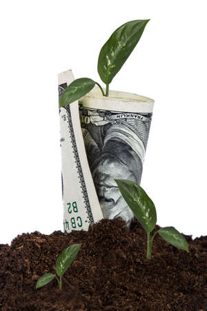 us currency: One hundred dollar bill growing in soil with green plants, isolated on white background. Stock Photo