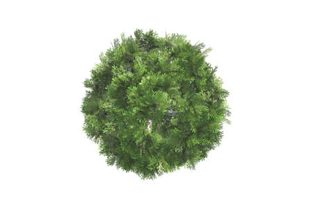 Top view of green natural tree for your landscape designs, isolated on white background. Stock Photo