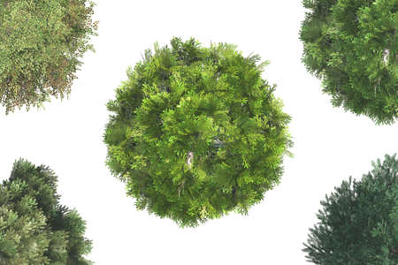 Top view of green natural trees, isolated on white background. photo