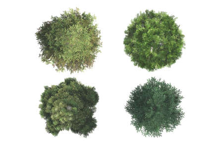 Bovenaanzicht van groene natuurlijke bomen, op een witte achtergrond.