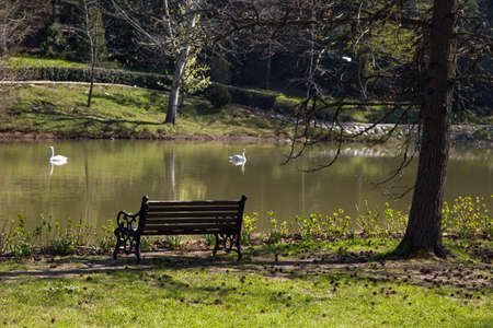 riverside trees: Lake in forest, river among trees, bench in riverside, swan in lake. Stock Photo