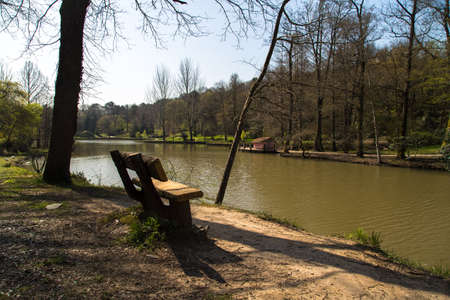 riverside trees: Lake in forest, river among trees, bench in riverside.