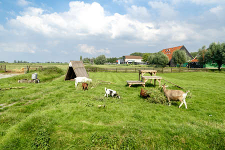 Landscape view of farm field with cows and sheep on cloudy blue sky background.