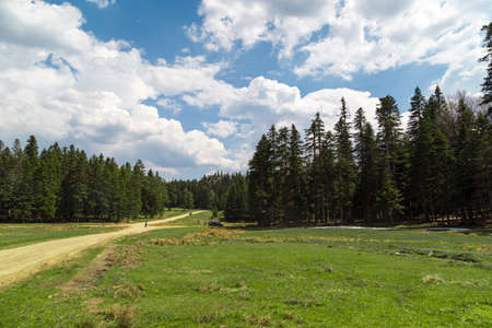 plateau: General view of Purenli Plateau with mountain houses in meadow area and big pine trees around on bright sky background. Stock Photo