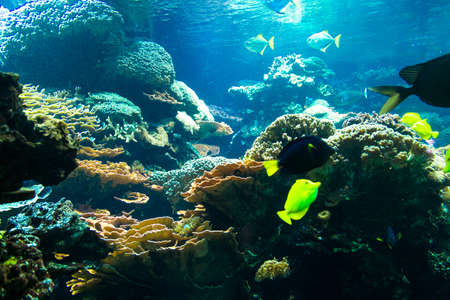 Deep water aquarium, underwater coral reef landscape with tropical fish and plants around. Stock Photo