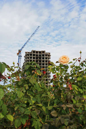 Flower beds. In the background is the construction of new homes.