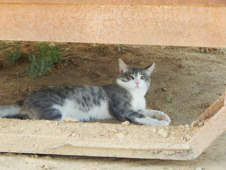 Beautiful young cat lying on the ground and looking up.