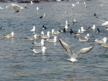 caspian: Seagulls near the shore. Caspian Sea.