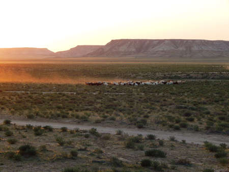 Herd of sheep against the background of the steppe mountains. Kazakhstan