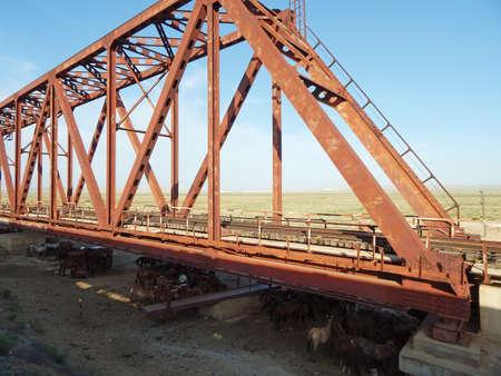 Horses under the railway bridge. Railroad bridge. Mangistau region. Kazakhstan.