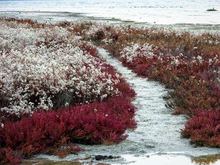 Autumn coast of the Caspian Sea. A plant covered with fluff on the seashore. Rocky seashore. Kazakhstan Mangistau region. 29 October 2019 year. Stock Photo