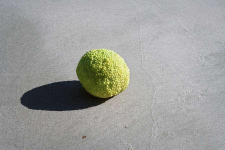 Adam's apple on the sandy shore of the Caspian Sea.