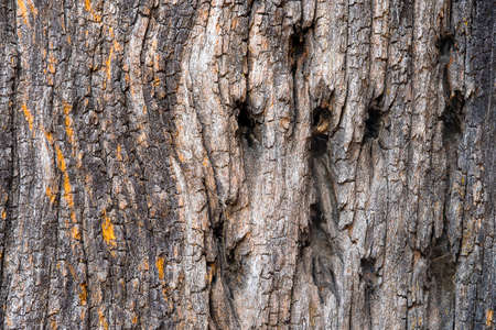 bark background texture: Old rough tree bark background texture organic patterns