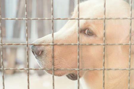Perro triste detrás de la jaula.