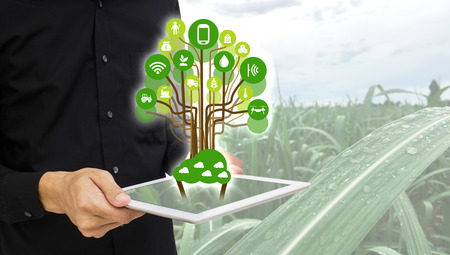 Internet of things(agriculture concept).Icon of smart farming,the man hold the taplet with smart farm concept on sugarcane field background