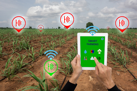 Internet des choses (concept de l'agriculture), agriculture intelligente, agriculture intelligente. L'agriculteur utilise une application dans le taplet pour contrôler et surveiller la condition par le système de capteurs sans fil dans le domaine de l'agriculture Banque d'images - 70854404