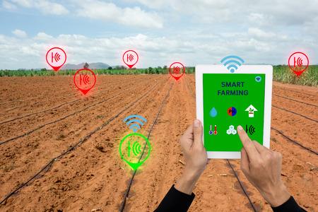 L'Internet des choses (concept d'agriculture), l'agriculture intelligente, l'agriculture intelligente. L'agriculteur utilise une application dans le taplet pour contrôler et surveiller la condition par un système de capteurs sans fil dans le domaine de l'agriculture Banque d'images - 70890370