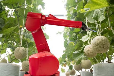 Agritech 기술 개념, 수확량, 효율성 및 수익성 향상 목적을 위해 스마트 농업 또는 농업에서 로봇 사용. 제품, 서비스 또는 다양한 입  출력 프로세스를