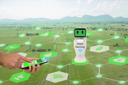 iot, internet of things,agriculture concept.Farmer use mobile phone connect Smart Robotic (artificial intelligence,ai) use for management , control , monitoring, and detect with the sensor in the farm Stock Photo