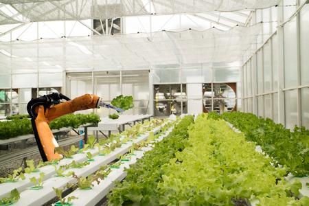똑똑한 로봇의 미래 개념, 로봇 농부 (자동화)는 수직 또는 실내 농장에서 효율성 향상, 씨앗 재배, 수확, 시간 단축을 위해 프로그래밍해야합니다