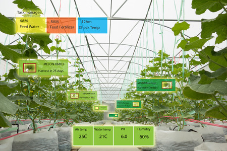 똑똑한 농업 개념, 농업 경제학자 또는 농부가 농장에서 인공 지능과 증강 현실을 사용하여 시스템을 성장시키고 물을 절약하며 자원이 노동 시간을