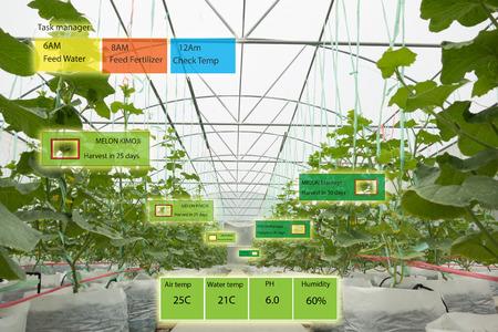 Slim landbouwconcept, agronoom of landbouwersgebruik Kunstmatige intelligentie en augmented reality in de boerderij helpen systemen te laten groeien, water te besparen, hulpbronnen verminderen de arbeidstijd, maken een hoge opbrengst en voorspellen
