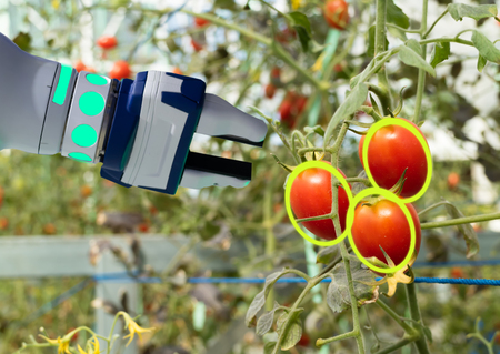 smart robotic in agriculture futuristic concept, robot farmers (automation) must be programmed to work to collect vegetable and fruit by using deep learning and object recognition technology
