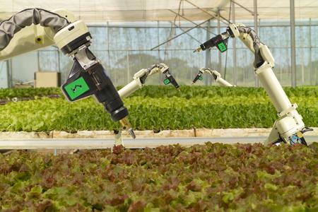 robot robótico en la agricultura concepto futurista, los agricultores de robots (automatización) deben estar programados para trabajar para rociar productos químicos, fertilizantes o aumentar la eficiencia, cultivar una semilla, cosechar, reducir el tiempo Foto de archivo