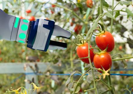 農業の未来的な概念のスマートロボット、ロボット農家(オートメーション)は、効率を高めるために垂直または屋内農場で動作するようにプ 写真素材