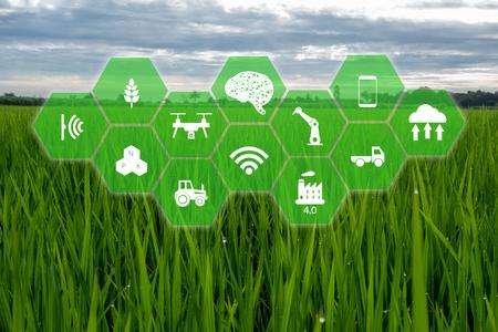 iot, internet de las cosas, concepto de agricultura de granjero, granja inteligente con icono robótico (inteligencia artificial / ai) que se utiliza para la gestión, control, seguimiento y detección con el sensor en la granja, campo.