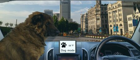 smart autonomous car use dog and sentry mode to protect or guard the car and pet In addition to keeping the climate control on, the touchscreen will display the current cabin temperature Фото со стока