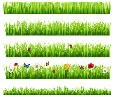 butterfly border: Green grass collection  Illustration