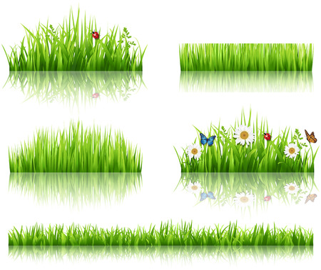 field of daisies: Green grass collection  Illustration